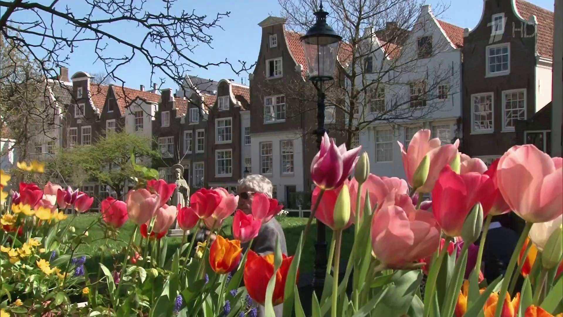 Автобусный тур в Амстердам Голландию из Минска по низкой цене Цветочный WEEK-END