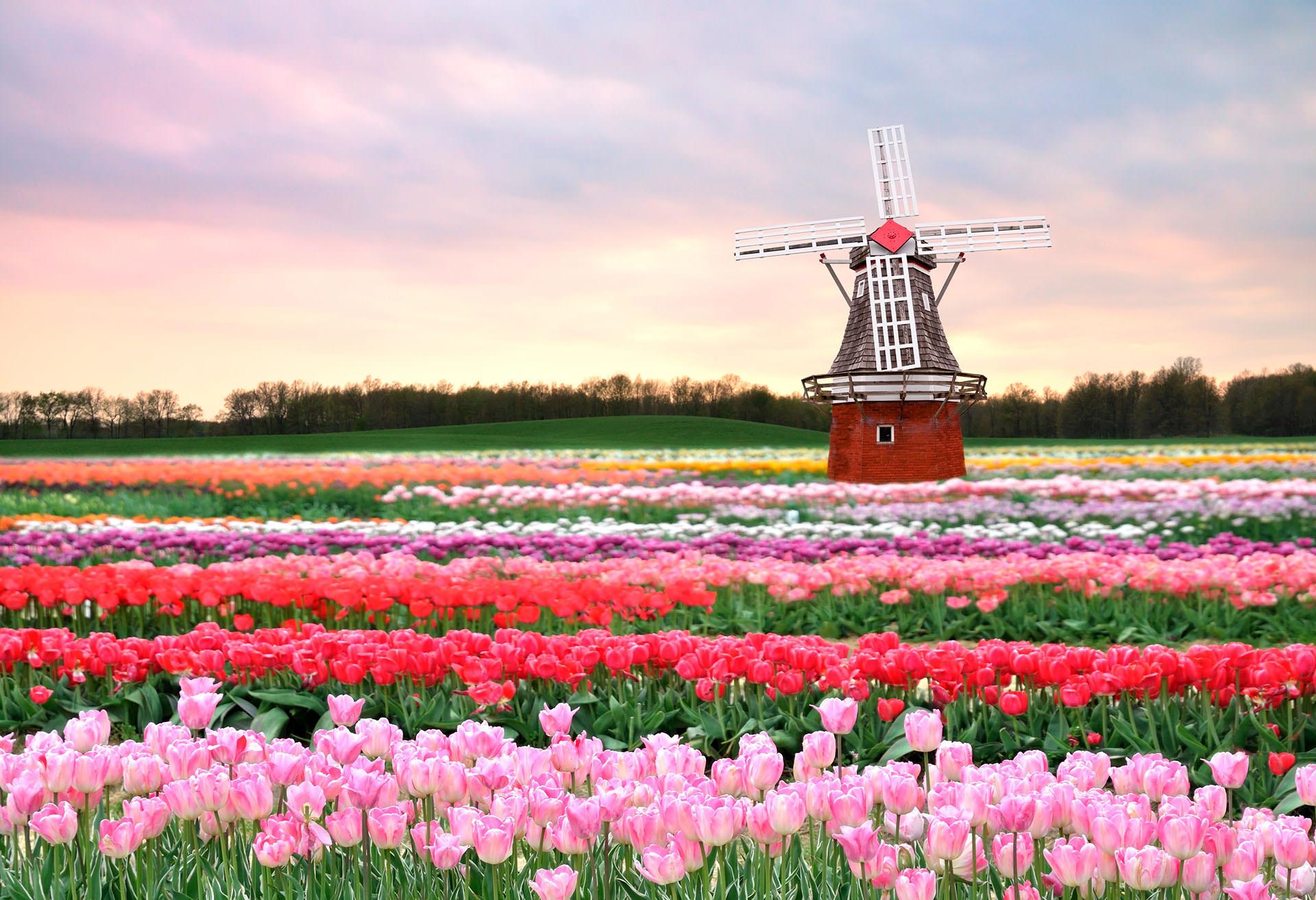 Автобусный тур в Голландию из Минска по низкой цене В королевстве цветов