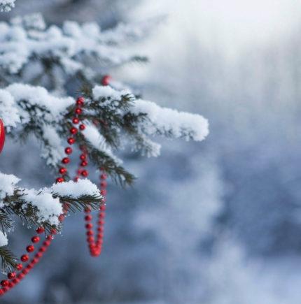 Рождественские каникулы в Карпатах Автобусный тур из Минска