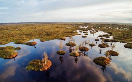 Экскурсия на болото Ельня на 2 дня
